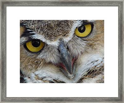 Great Horned Owl Framed Print by Janeen Wassink Searles