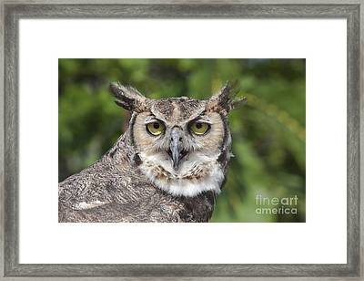 Great Horned Owl Framed Print by Keith Kapple