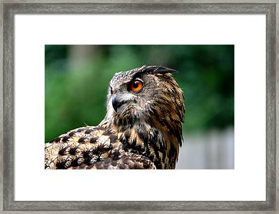 Great Horned Owl Framed Print by Ronald T Williams