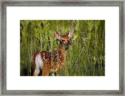 Great Lashes Framed Print