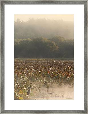 Great Meadows National Wildlife Refuge Blue Heron Fog Framed Print by John Burk