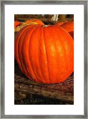 Great Orange Pumpkin Framed Print by LeeAnn McLaneGoetz McLaneGoetzStudioLLCcom