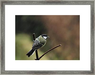 Great Tit In The Rain Framed Print by Peter Skelton