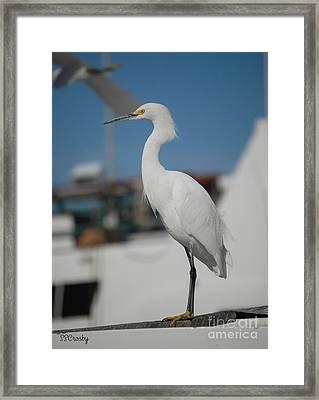 Great White Egret 2 Framed Print