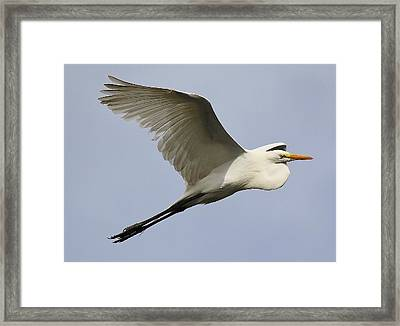 Great White Egret At The Beach Framed Print by Paulette Thomas