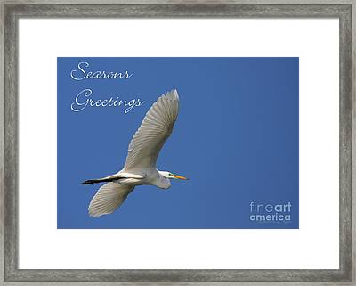 Great White Egret Holiday Card Framed Print by Sabrina L Ryan