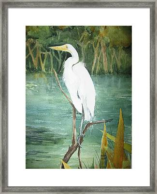 Great White Egret Framed Print