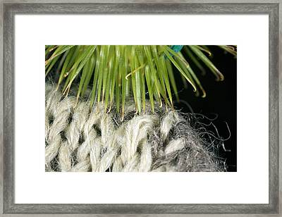 Greater Burdock Burr Caught On Wool Framed Print by Dr Keith Wheeler
