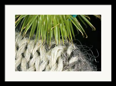 Barb Woolly Framed Prints