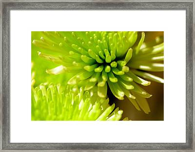 Framed Print featuring the photograph Green Alien Flower by Tanya Tanski