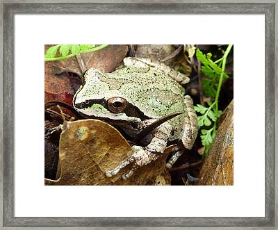Framed Print featuring the photograph Green And Brown Frog by Cindy Wright