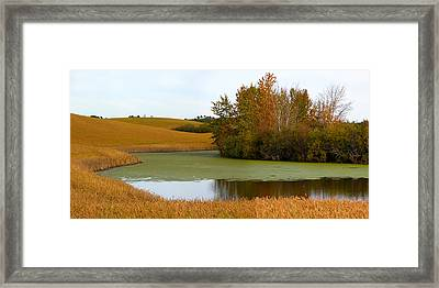 Green And Gold Framed Print by Stuart Turnbull