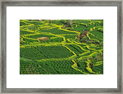 Green And Yellow Field Framed Print by MelindaChan