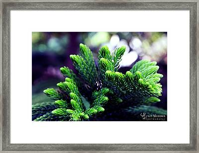 Green Framed Print by Aunit Sharma