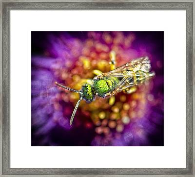Green Bee Framed Print by Vicki Jauron