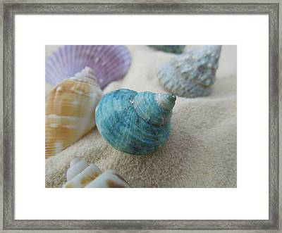 Green-blue Shell In The Sand Framed Print