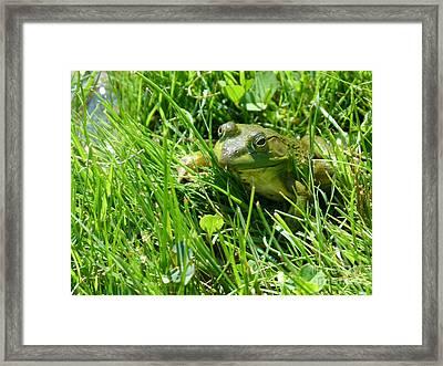 Green Framed Print by Christine Stack