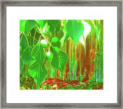 Green Curtain Framed Print by Juliana  Blessington