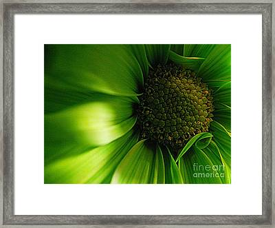 Framed Print featuring the photograph Green Daisy by Robin Dickinson