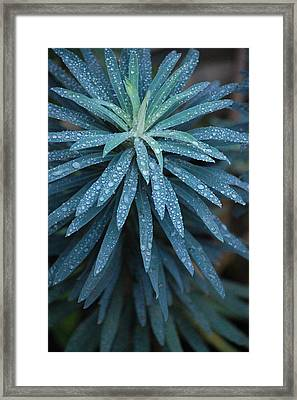 Green Dew Framed Print by Dickon Thompson