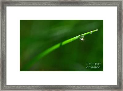 Green Drops Framed Print