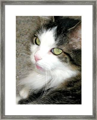 Green-eyed Cat Framed Print by Inga Smith