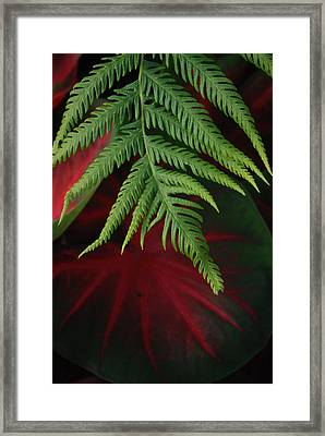Green Fern Black And Red Leaf Framed Print by Jennifer Holcombe
