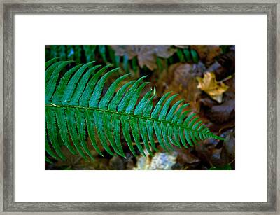 Framed Print featuring the photograph Green Fern by Tikvah's Hope