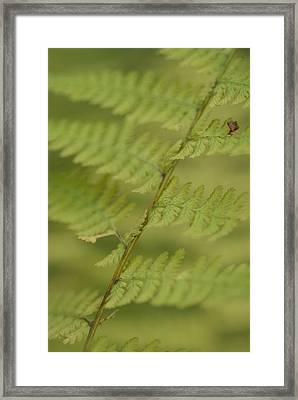 Green Ferns Blend Together Framed Print by Heather Perry