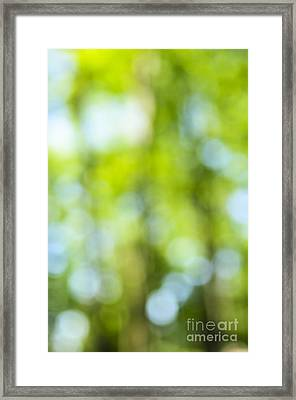Green Forest And Blue Sky Framed Print by Elena Elisseeva