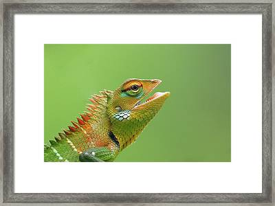 Green Forest Lizard Framed Print by Saranga Deva De Alwis