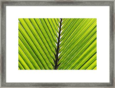 Green Fronds Framed Print by Lauri Novak
