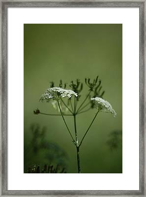 Green Garden Framed Print by Dickon Thompson