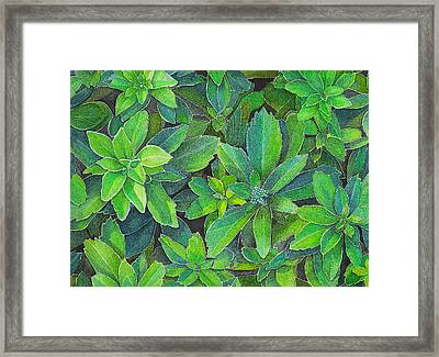 Green Gold Framed Print by Yvonne Scott
