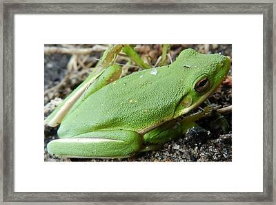 Green Green Framed Print by William Bryan