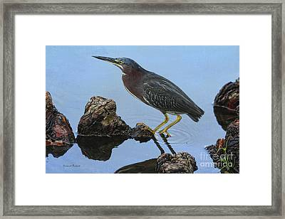 Green Heron Visiting The Pond Framed Print by Deborah Benoit