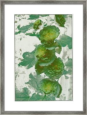 Framed Print featuring the photograph Green Hollyhocks by Tom Wurl