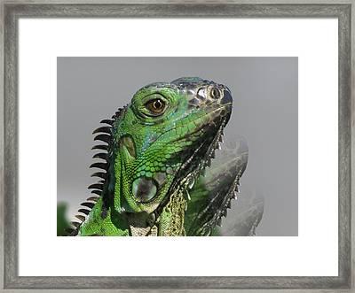 Green Iguana Triple Framed Print by Vijay Sharon Govender