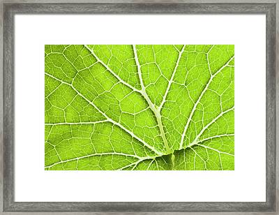 Green Leaf And Veins Framed Print