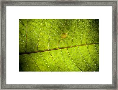Green Leaf Background Framed Print by Maratsavalai Lertsirivilai