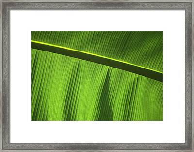 Green Leaf, Close-up Framed Print by Axiom Photographic