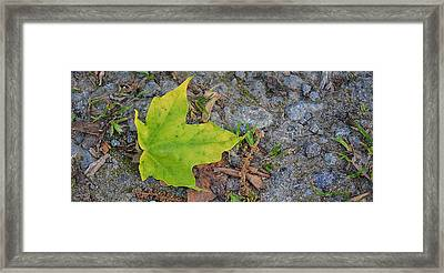 Green Leaf On Ground Framed Print
