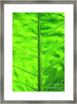 Green Leaf Framed Print by Sami Sarkis