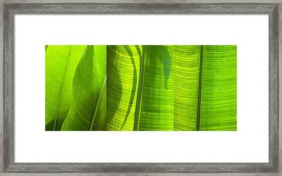Green Leaf Framed Print by Setsiri Silapasuwanchai