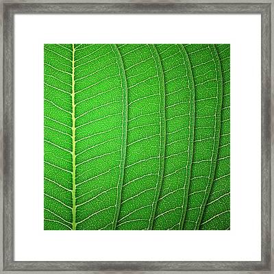 Green Leaf Texture Framed Print by Natthawut Punyosaeng