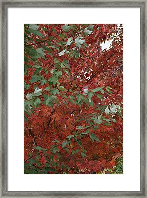 Green Leaves Against Red Leaves Framed Print by Mick Anderson