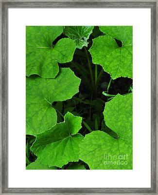 Green Leaves Framed Print by Thomas R Fletcher