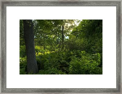 Green Light Framed Print by Steve Gadomski