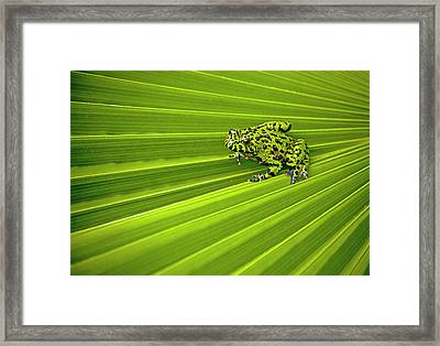 Green Lines Of Nature Framed Print by Jeff R Clow