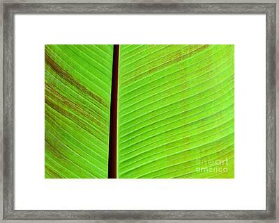 Green Lines Framed Print by Sabrina L Ryan